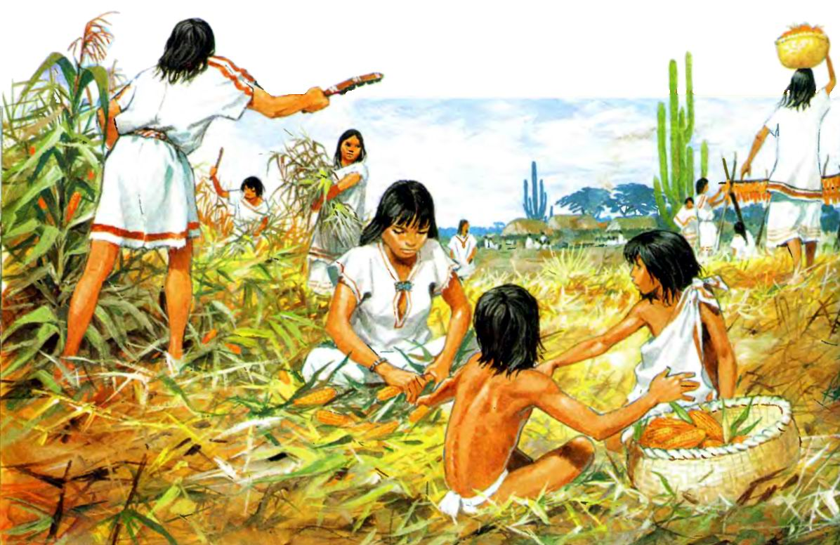 aztec agriculture system - 700×454