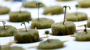 Индейцы санти-сиу будут выращивать и продавать в Южной Дакоте коноплю официально. Фото: AP