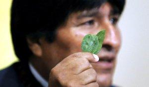 Эво Моралесу судья КС Боливии нагадал на листях коки третий срок президентства