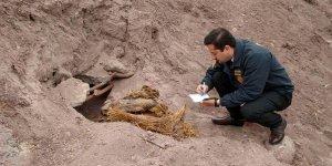 В Чили нашли мумии культуры Копьяпо. Фото: Diario Atacama