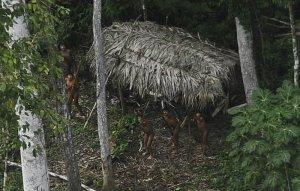 Новые фотографии неконтактных индейцев из Бразилии, проживающих на границе с Перу. Фото - Lunae Parracho / REUTERS