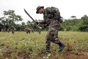Боливийские силовики несут потери, уничтожая посевы коки. Архивное фото - Juan Karita / Associated Press