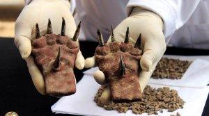 Потрясающая находка в Уака-де-ла-Луна – могила представителя элиты культуры Мочика. Фото - Jhonny Aurazo / El Comercio / elcomercio.pe