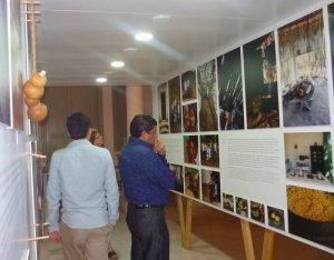 Выставка «Мы, современные майя» проходит в Мериде (Мексика). Фото - informaciondelonuevo.com