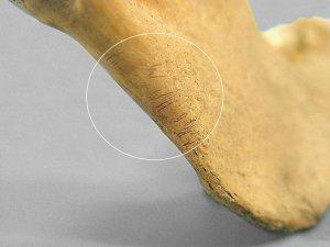 Порезы на человеческой кости, подтверждающие антропофагию у ацтеков. Фото - INAH