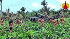 Начата финальная стадия спасения племени ауа – выдворение лесорубов и ранчеро. Кадр из репортажа FUNAI