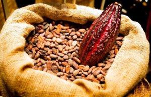 Какао использовалось индейцами современного Эквадора уже 5 500 лет назад