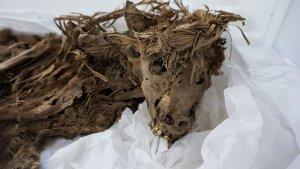 1000-летнее собачье и человеческое кладбище раскопано под зоопарком в Лиме (Перу). У некоторых из собак хорошо сохранились даже уши и нос. Фото: Лукес Олмос