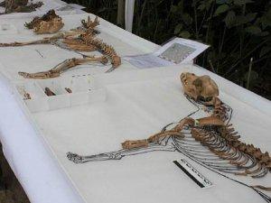 С человеческими останками в Лиме (Перу) найдены более сотни собачьих скелетов возрастом около 1000 лет. Фото - El Comercio / elcomercio.pe