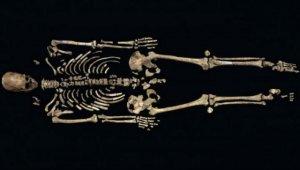 «Кенневикский человек» все же оказался родственником древних американоидов. Фото: Chip Clark/Smithsonian National Museum