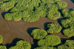 Мексиканское биоразнообразие под угрозой