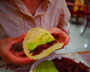 Жареные черви магея (личинки Aegiale hesperiaris). Фото - trekfortwo.com