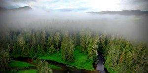 Исследование: индейцы Британской Колумбии многие тысячи лет благотворно влияли на окружающую среду. Фото: Will McInnes/Hakai Institute