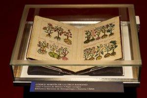 Выставка «Мексиканские кодексы: память и знания». Фото - OMAR TORRES / AFP PHOTO