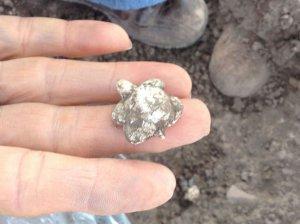 Фигурка черепашки, найденная в перевернутом сосуде. Фото – INAH