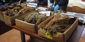 Чилийские археологи сообщают об обнаружении трех мумий, возраст которых приближается к тысяче лет. В захоронение, в котором находились мумии, были найдены древние керамические изделия и детские игрушки. Фото: Diario Atacama