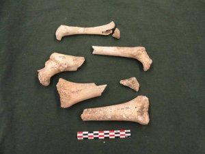 Кости из «Пещеры полуночного ужаса». Фото: Майкл Праут