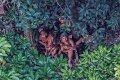 Опубликованы новые фотографии обнаруженных в 2008 году неконтактных индейцев Бразилии. Фото: Ricardo Stuckert / nationalgeographic.com