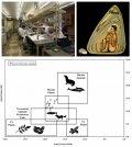 Древняя диета представителей культуры Паракас реконструирована при помощи биоархеологии и биогеохимии