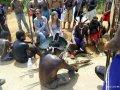 Индейцы паракана и журуна блокировали дорогу к строителям дамбы Бело Монте. Фото - Leticia Leite-ISA