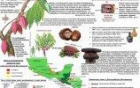 Какао в Месоамерике