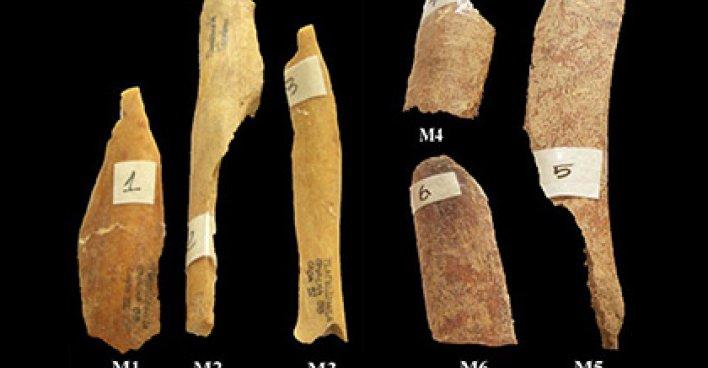 Исследуемые кости. Фото: A. Trujilo-Mederos и др. / Archaeometry