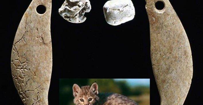 Остатки ошейника рысёнка. Фото: Кеннет Фарнсворт